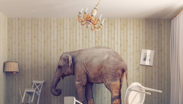 Let's talk about the elephant in the room- the marketing budget