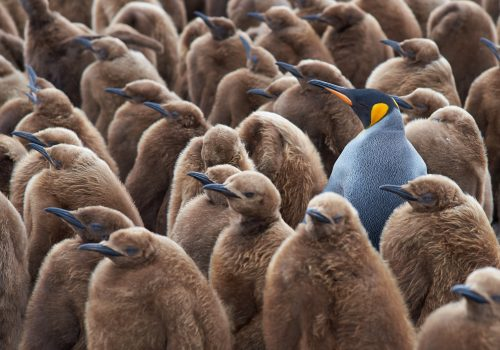 Personal branding for lawyers and accountants – stand out from the crowd