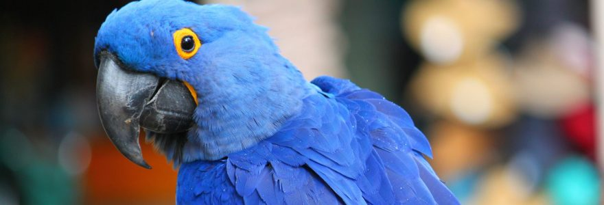Making your website chirp with voice search