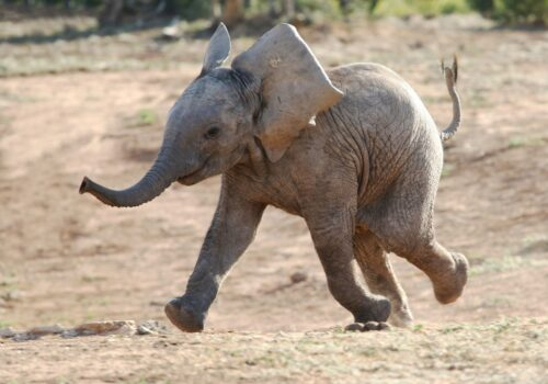 An elephant never forgets to implement these small law firm marketing strategies